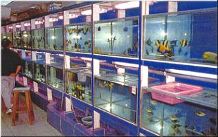 International report hong kong aqua craft products for Fish stores in ma
