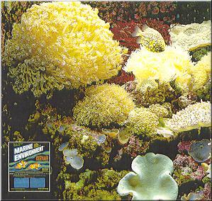 Delicate Corals