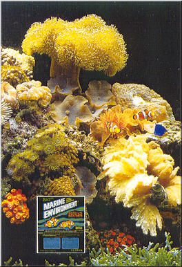 Reef Aquarium With Clownfish